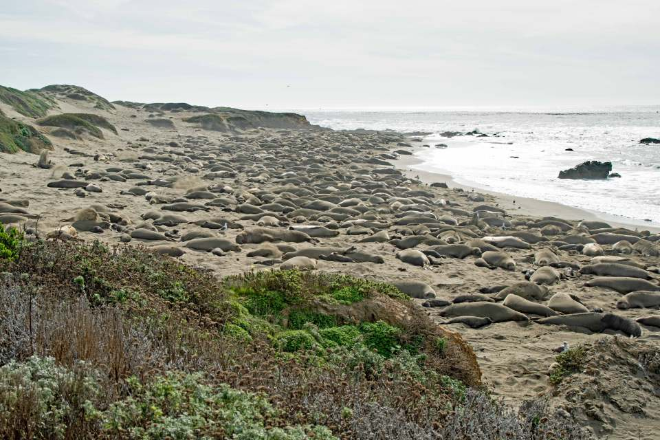 Where Do Elephant Seals Live?
