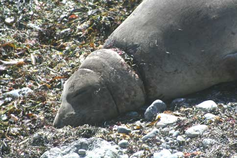 Don't Trash the Ocean