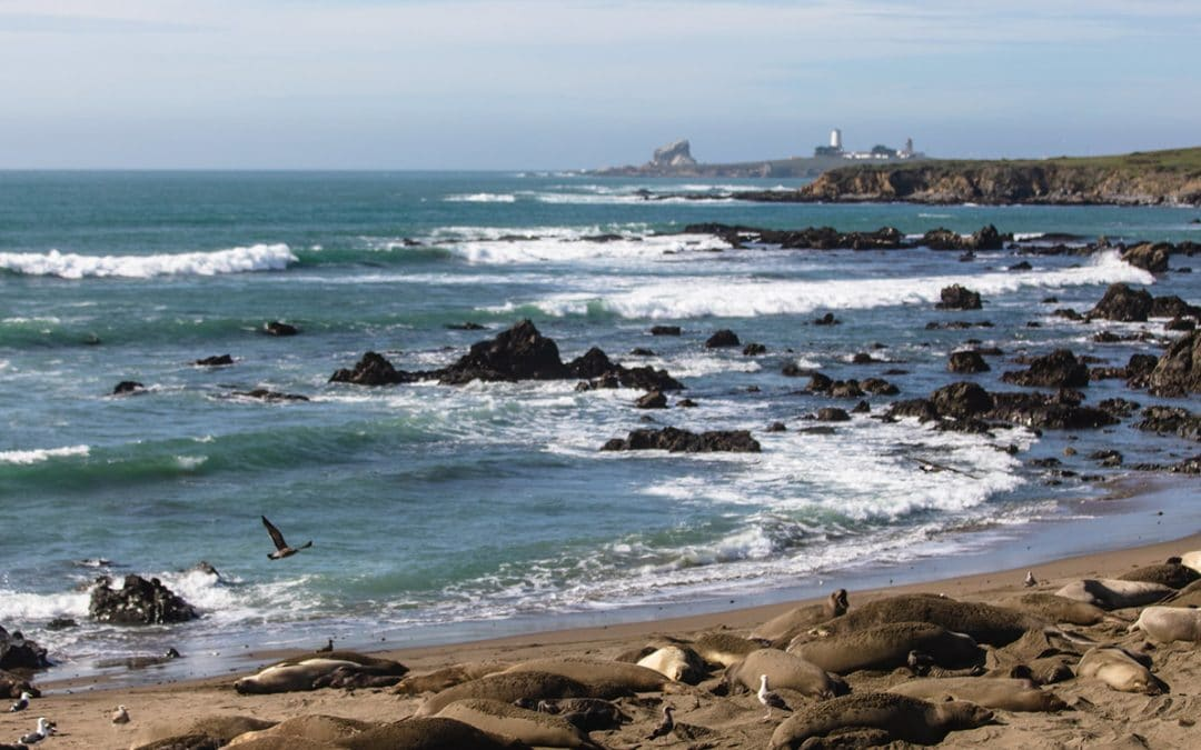 Where Can Elephant Seals Be Found?