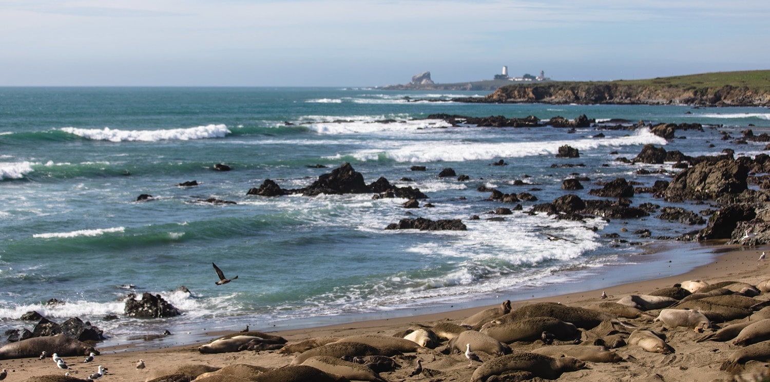 other elephant seal rookeries