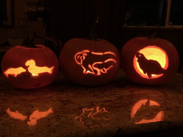 Elephant Seals in the Pumpkin Patch