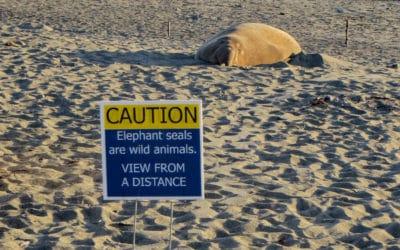 Recruiting Volunteer Guides for Elephant Seal Winter Program